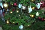 Dân Việt chi tiền 'khủng' săn cây thông Noel thật từ châu Âu