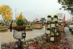 Ngắm mặt trời quay theo gió tại đường hoa 'Xuân sắc màu' bên sông Hàn
