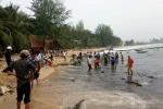 Đổ xô đi bắt hải sâm dạt vào bờ biển Phú Quốc