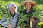 Tiết lộ bí quyết sống lâu của ngôi làng ai cũng 100 tuổi