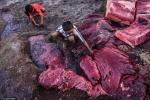 Ám ảnh cảnh ngư dân săn giết, xẻ thịt cá voi trên một hòn đảo xa xôi