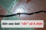 Video: Kỳ lạ loài 'rắn' có 4 chân giá bạc triệu được dân mạng ráo riết săn lùng