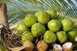 Vinamilk đầu tư vào chế biến dừa