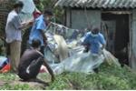 Phát hiện một xác chết đang phân hủy trong lu tại Trà Vinh