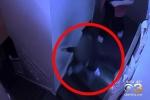 Phẫn nộ clip nhân viên trường mầm non xô ngã bé 4 tuổi xuống cầu thang