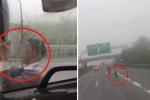 Clip: Người đàn ông giỡn mặt tử thần, đu bám xe tải đang chạy trên cao tốc