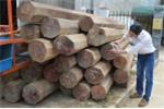 Nhà nguyên phó bí thư huyện ủy chứa gỗ lậu