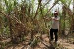 Dân trồng mía ôm nợ vì công ty thu mua ở Đắk Lắk hứa lèo