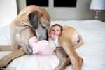 Tại sao yêu chó lại tốt cho sức khỏe?