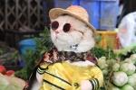 """Video: Chú mèo tên Chó ngộ nghĩnh """"nhất vịnh Bắc Bộ"""", đi chợ tạo dáng bán hàng"""
