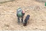 Video: Cuộc sống của những chú chó cứu nạn chuyên nghiệp