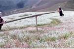 Clip người H'Mông chơi bập bênh giữa đồng hoa gây 'sốt' cộng đồng mạng thế giới