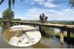 Ảnh: Thót tim qua cây cầu rệu rã chờ sập ở Quảng Nam