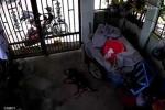 Clip cẩu tặc quăng bả trộm chó táo tợn ở TP.HCM