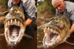 Clip: Nghẹt thở xem cần thủ thu phục 'thủy quái ăn thịt đáng sợ nhất châu Phi'