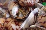 Cô giáo trẻ chết sau khi ăn ốc lạ: Chất độc trong ốc có sức hủy diệt khủng khiếp