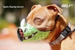 Muôn vàn kiểu rọ mõm cực thời trang cho chó cưng