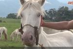 Chiêm ngưỡng thảo nguyên ngựa bạch lớn nhất Việt Nam tại Lạng Sơn