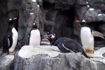 Quá lạnh, chim cánh cụt không sống nổi ở Canada