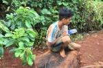 Truy bắt nhóm thanh niên cưa cây thủy tùng trên 500 tuổi