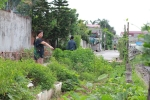Nghi vấn phun thuốc diệt cỏ vào rau đầu độc hàng xóm ở Hải Phòng: Vì sao không khởi tố vụ án?