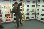 Con rắn cực độc, có thể đoạt mạng 100 người chỉ bằng một vết cắn