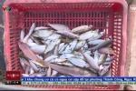 Clip: Công khai bán cá chết ở vùng biển Hà Tĩnh