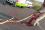 Clip: Bị túm đuôi, trăn hung dữ chồm lên đòi cắn cảnh sát