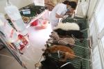 Video: Nắng nóng đỉnh điểm, thú cưng đổ bệnh ùn ùn nhập viện ở Hà Nội