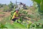Truy tìm kẻ chặt vườn cây của gia đình người bị sát hại đêm giao thừa ở Hà Nội