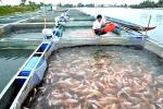 Lên bờ không biết làm gì, người dân nuôi cá lồng bè bất chấp lệnh cấm
