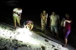 Đêm tối đi săn loài 'nhát chết', nướng thơm lừng ở Quảng Ngãi