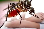 Lần đầu phát hiện ca nhiễm virus Zika do quan hệ tình dục