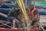 Thái Bình, Nam Định cấp tập di dân vùng ven biển tránh bão