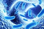 Nghiên cứu công nghệ sản xuất thực phẩm chức năng từ vi khuẩn probiotics