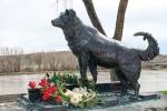 Lòng trung thành trong bài diễn văn về chó hay nhất thế giới 1.000 năm qua