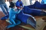 Cuba huy động máy bay giải cứu cá heo khỏi bão Irma