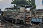 Xe tải chở lợn nhiễm virus dịch tả lợn châu Phi từ Bắc Ninh ngang nhiên dừng bán ở Quảng Nam