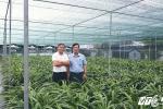Ngắm vườn địa lan Hoàng Vũ được xác nhận kỷ lục của 'lão nông nho nhã' đất Thành Nam