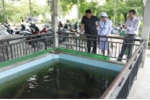 Khó tin, nuôi cá trong bể nước thải của bệnh viện
