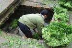 Video: Đường đi của rau bẩn trước khi đến Hà Nội