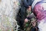 Bí ẩn hang động chôn giấu 70 thúng vàng bạc ở Cao Bằng