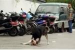 Video: Chú chó lay bạn vừa chết sau tai nạn khiến dân mạng không cầm nổi nước mắt