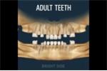 Quá trình mọc răng và thay răng của con người diễn ra thế nào?
