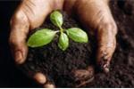 7 công dụng bất ngờ của bã trà người làm vườn nào cũng nên biết