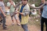 Bắt được rắn hổ mang chúa 'khủng' ở Phú Thọ