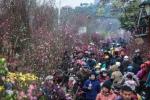 Dịp Tết Nguyên đán Kỷ hợi 2019, thời tiết 3 miền thế nào?