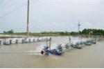 Cần sớm nhân rộng mô hình tiết kiệm điện trong nuôi tôm tại Sóc Trăng