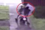 Clip: Trộm lóng ngóng đánh rơi tivi 43 inch trên đường tẩu thoát