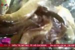 Công nghệ 'lên đời' cá trê vàng bằng hóa chất lạ